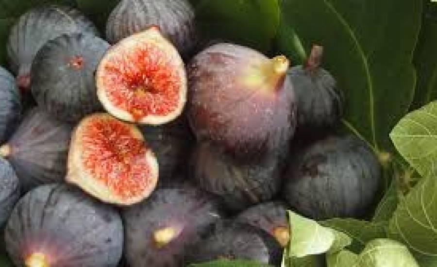 TounsiaNet : La figue, l'aliment aux bienfaits magiques pour notre santé et notre beauté