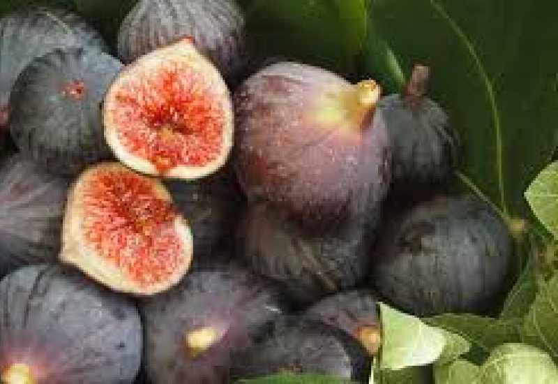 tounsia.Net : La figue, l'aliment aux bienfaits magiques pour notre santé et notre beauté